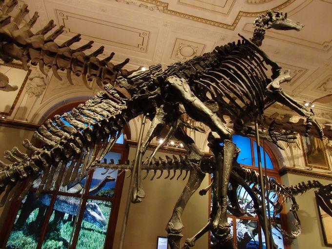 膨大な展示品がズラリ!「自然史博物館」