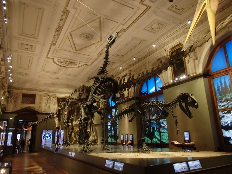 貴重で膨大な展示!ウィーン自然史博物館で地球の歴史を垣間見よう