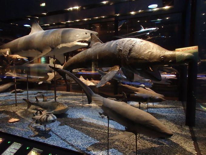 地球史を物語る化石や剥製の数々