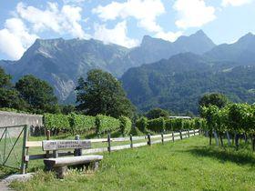 ようこそハイジの世界へ!スイス・マイエンフェルトでハイキング満喫
