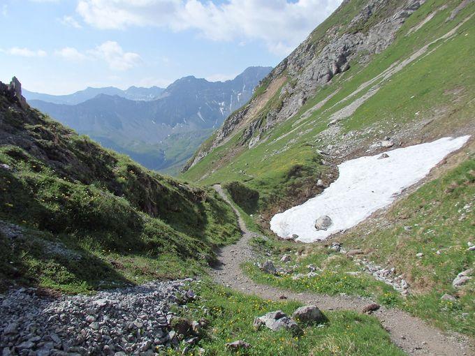 たくさんの高山植物と雪渓のハイキングコース