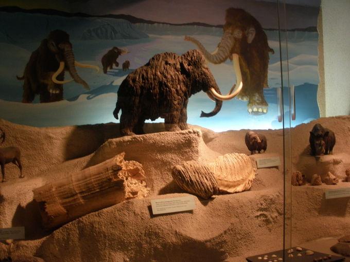 発掘品・美術品が一堂に!「ブリストル市立博物館」