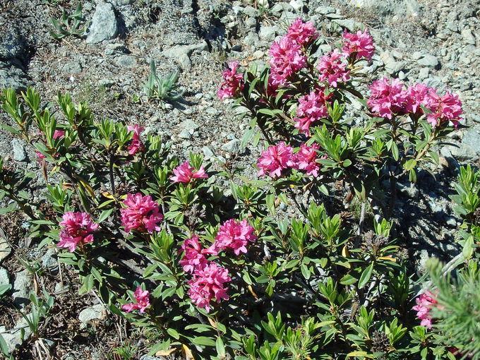歩きやすくお花溢れるハイキングコース