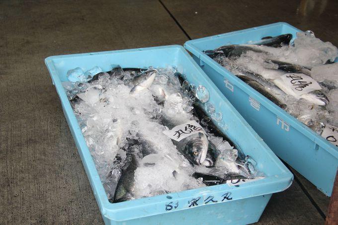 輝きが違う!石巻漁港で水揚げされる新鮮な魚