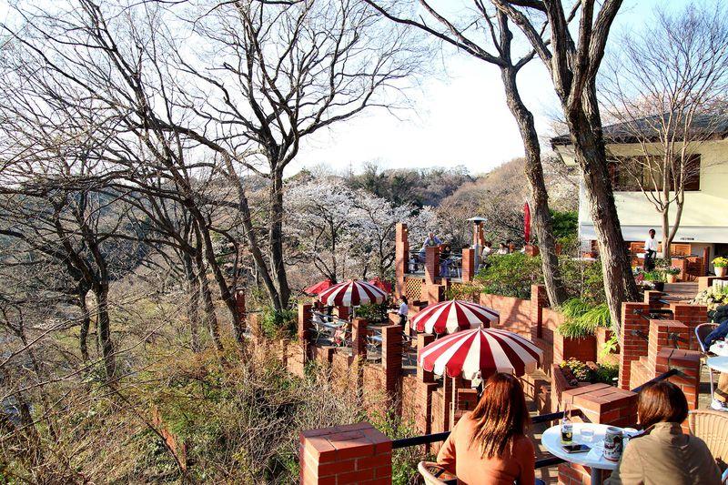 リスがお出迎え!鎌倉・天空のカフェ「樹ガーデン」はまるでラピュタ!?