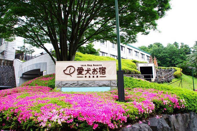 伊豆高原エリアのリゾートホテルが熱い!