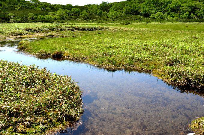 泉という印象の美しい沼たち