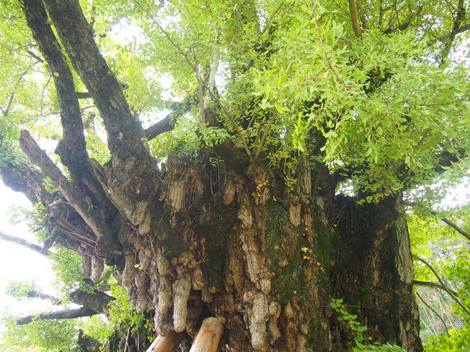 「いちごんさん」と通称される葛城一言主神社では願い事を一つだけ