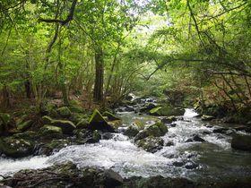 清流と自然林がつくり出す繊細な景観、京都「るり渓」で身も心も癒やされよう