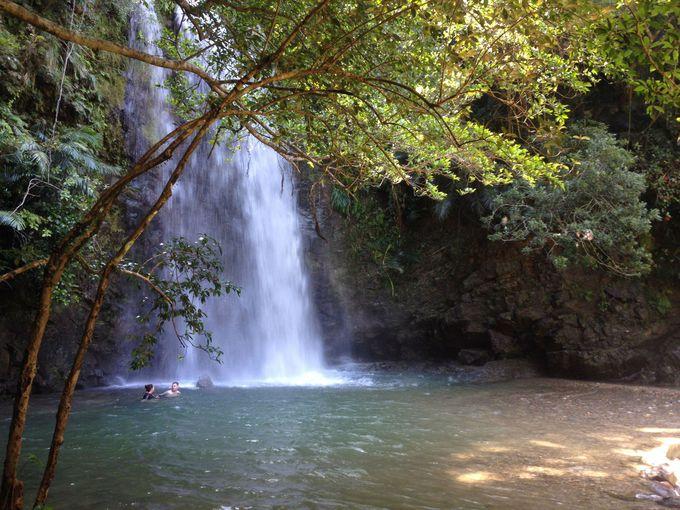 浴びろ、泳げ、飛び込め、ター滝!