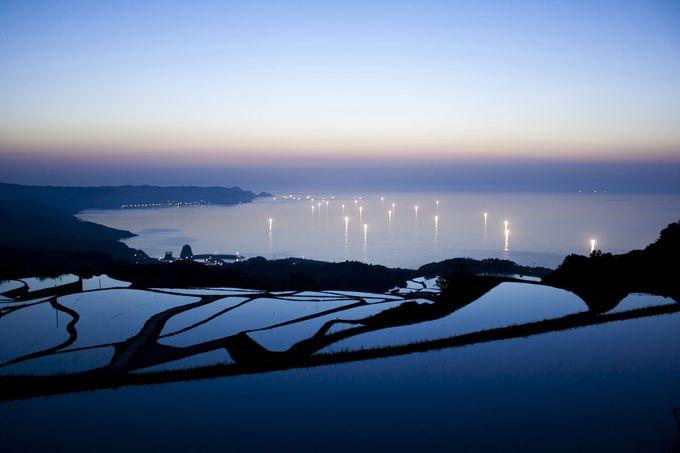 海と水田の絶妙コラボ!長門市油谷の個性あふれる棚田たち