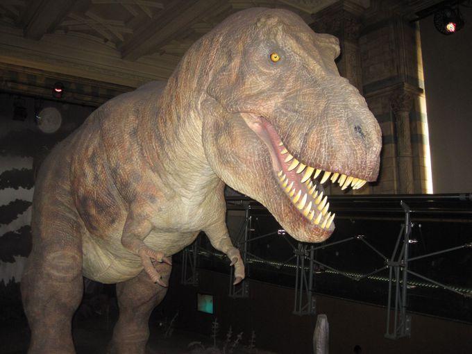 一番人気は動く恐竜「ティラノサウルス」