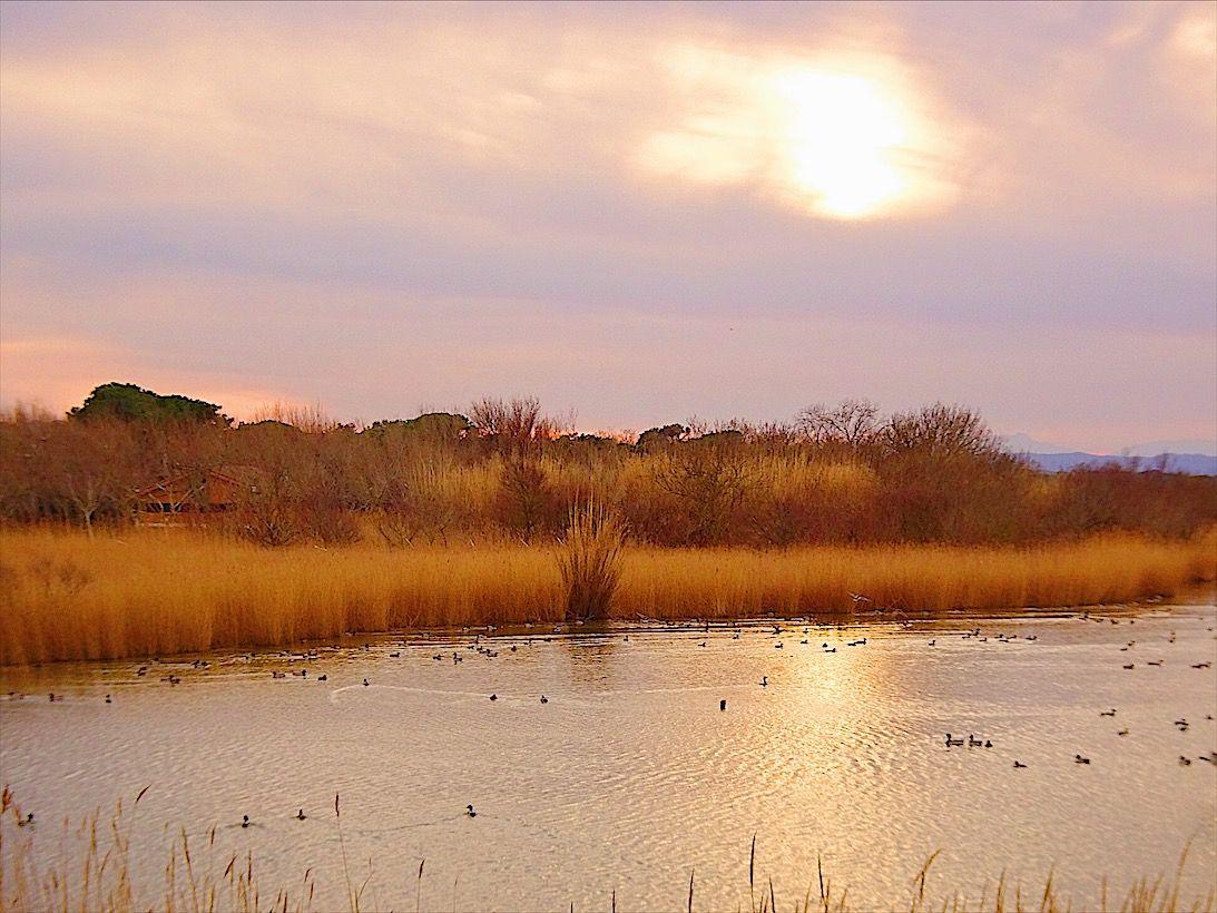 自然に溶け込む!スペイン「パルス」で野鳥や自然に癒される