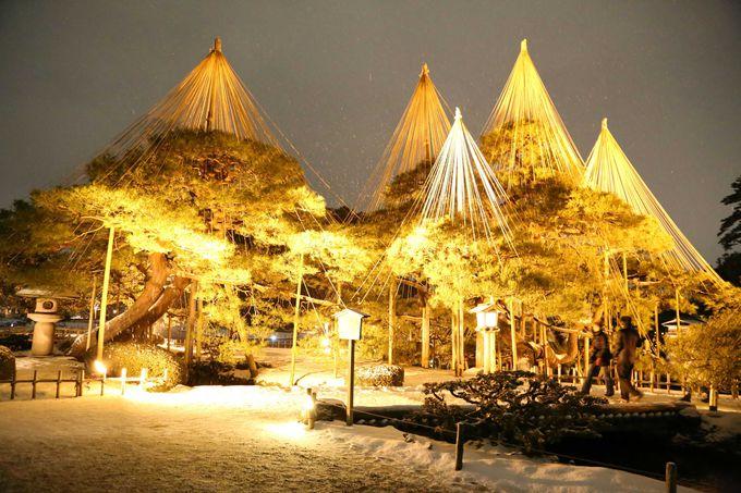 ライトアップされた幻想的な雪吊り