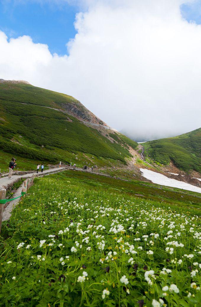 【乗鞍】日本最高峰を走る乗鞍スカイラインで、天空のお花畑へ