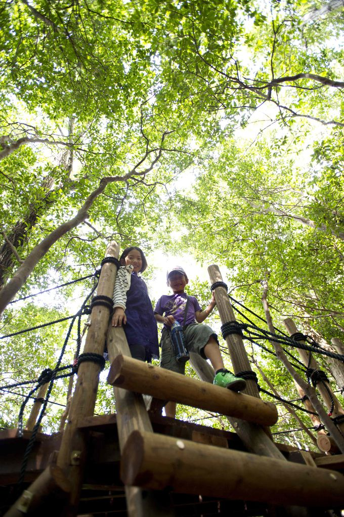 【山で遊ぼう】2014年に新エリア「free tree」がオープン