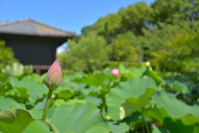 平安京の面影を色濃く残す寺院
