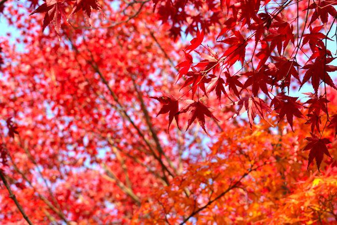 京都市指定名勝庭園にも認定された庭園