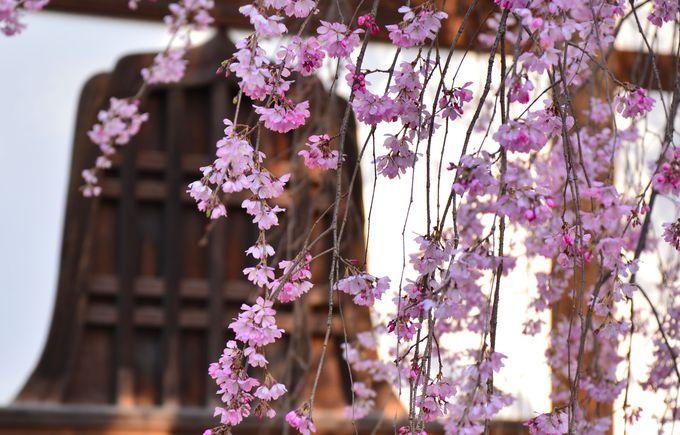 四季折々の色合いで迎えてくれる建仁寺