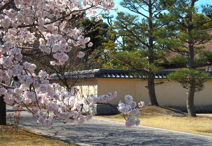 境内の様々な場所で 伽藍を彩る桜