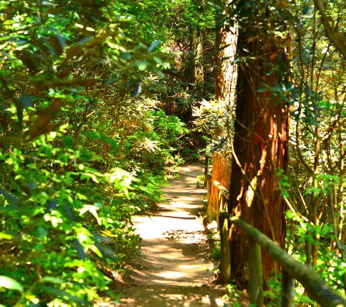都会からすぐなのに、手軽に、気軽に、森林の中へ