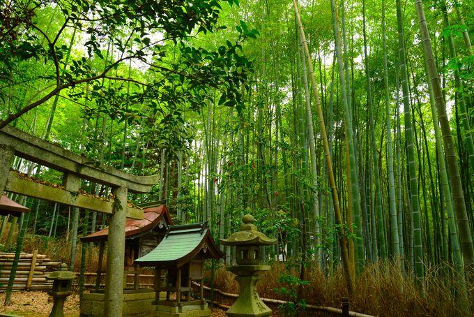 こんなにある!日本の緑色