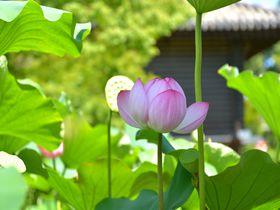 心の荷物をほどきたい時会いたくなる…京都・東寺 金堂の仏たち