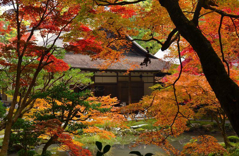 京都・南禅寺で紅葉なら、庭散策できる「南禅院」…竜田の楓の庭で秋にひたる