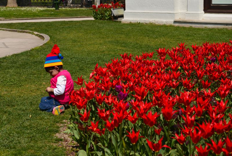 さすが原産国!春のイスタンブールは色鮮やかなチューリップの街