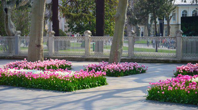 総大理石でつくられた宮殿の庭にも