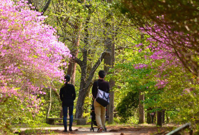 人気スポット六甲山!「神戸市立森林植物園」なら都会から近くで 国際港都のでっかい自然