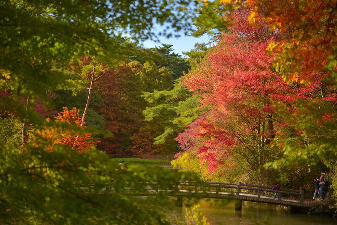 ぷちトリップ気分にさせてくれる、シアトルの森の紅葉
