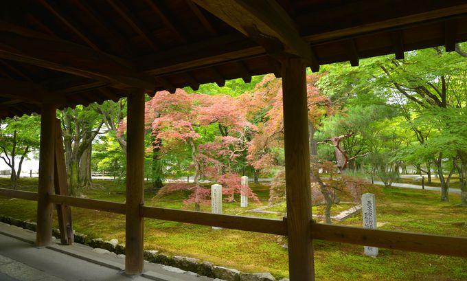 京都で最大の伽藍