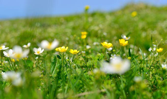 かわいいだけではない!たくましく生きている花々に感動
