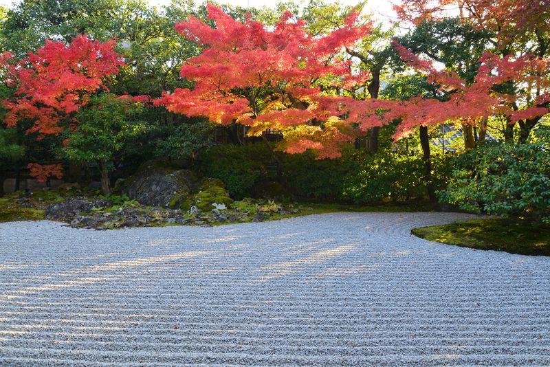 北政所ねねが余生を過ごした京都・圓徳院〜紅葉の中で秀吉ゆかりのお茶も!