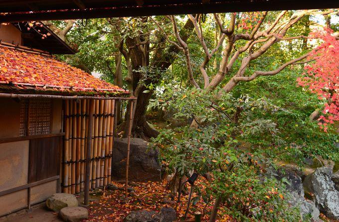 紅葉を愛でながら、秀吉ゆかりの武士の茶