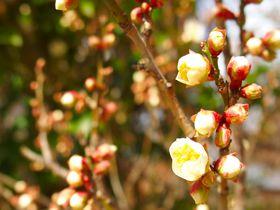 「令和」の由来「梅花の歌」の序文を詠んだ大伴旅人のゆかりの地をご紹介