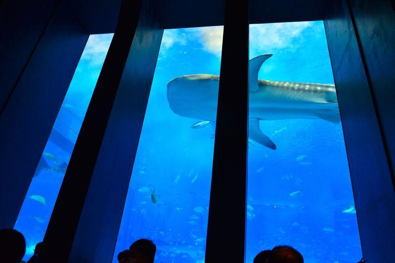 気分は海の底!美ら海水族館のおすすめカフェ「OCEAN BLUE」
