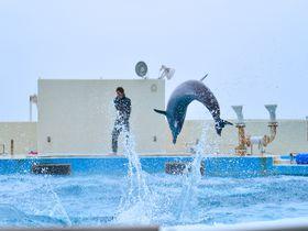 海洋博公園まで7分!沖縄「本部グリーンパークホテル」でリーズナブルステイ