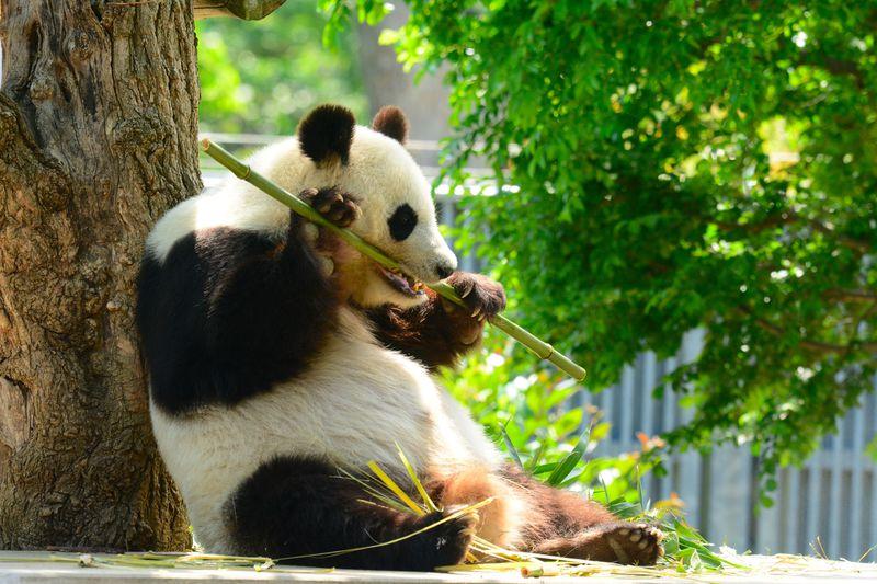 パンダに コアラに 異人館!神戸市立王子動物園を丸ごと楽しむ