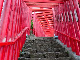 紅の世界でパワーを充電!山口県「元乃隅神社」で願望成就
