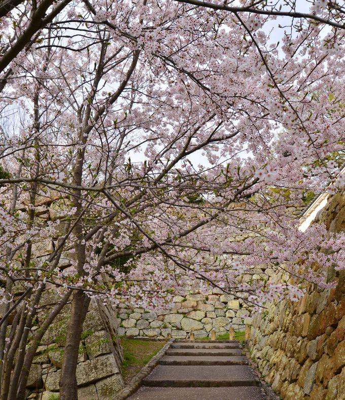芝生広場以外にもちりばめられた桜のいろどり