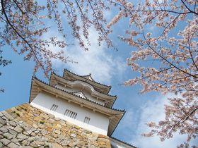 駅から1分でお城に桜…築城400年の明石城でお花見を