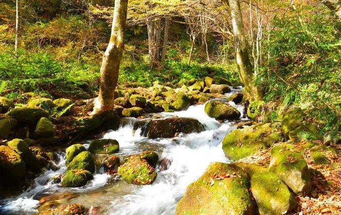 鳥取県の各自治体で実施中!観光支援策(1)