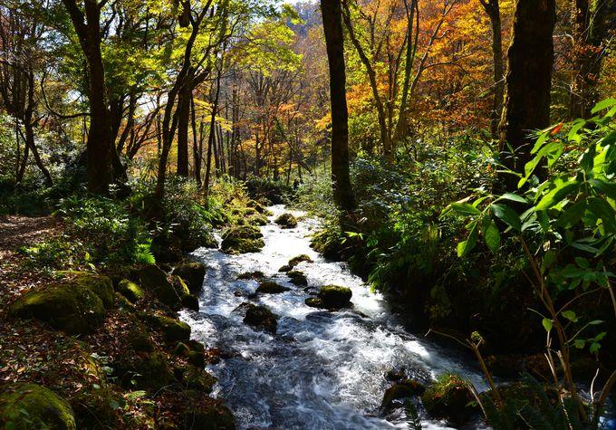 豊かな大地の恵みの水