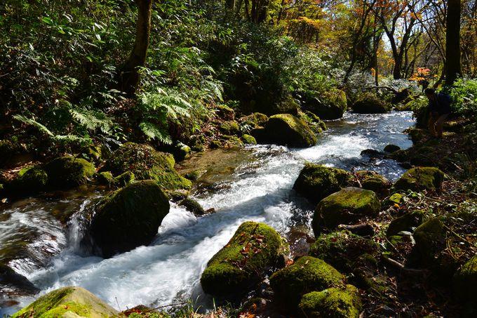 神が守った西日本最大のブナの森
