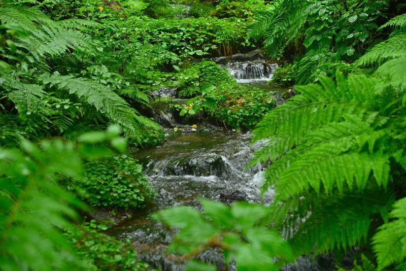 生命の宝庫ともいえる貴重な自然条件