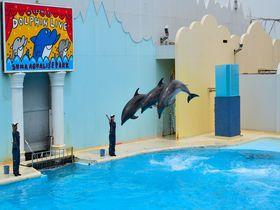充実度抜群!人気水族館「須磨海浜水族園」で楽しむ神戸