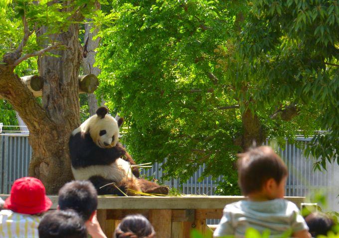 1日目午前:まずは 日本でここだけ!パンダにもコアラにも会える王子動物園