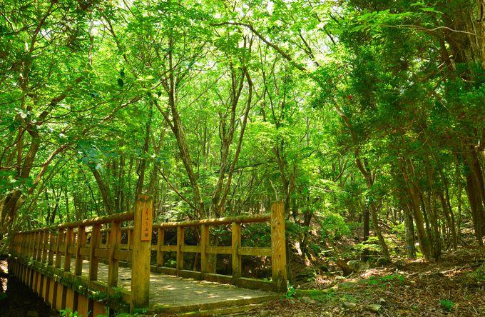 小1時間で散策できる幻想的な森